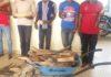 05 PRESUMES TRAFIQUANTS DES POINTES D'IVOIRE A LA BARRE A OWANDO Une audience portant sur la criminalité faunique est prévue ce 18 novembre, à la Cour d'appel d'Owando où cinq présumés trafiquants d'ivoire vont comparaître. Ces individus de nationalité congolaise ont été arrêtés depuis le 05 février 2019 à Etoumbi dans le département de la Cuvette-Ouest, avec 41 pointes d'ivoire pesant plus de 86 kg. Les pointes d'ivoire saisies représentent un massacre de plus de 20 éléphants. Ils sont donc poursuivis pour importation, détention, circulation illégales et commercialisation des trophées d'une espèce animale intégralement protégée (éléphant). Les peines prononcées par le Tribunal de Grande Instance d'Ewo à leur encontre dans cette affaire ont été qualifiées de laxistes et non conformes aux prescriptions de la loi par le ministère public et la direction départemental de l'économie forestière de la Cuvette-Ouest. Ces derniers ont donc interjeté appel devant la Cour d'Appel d'Owando.